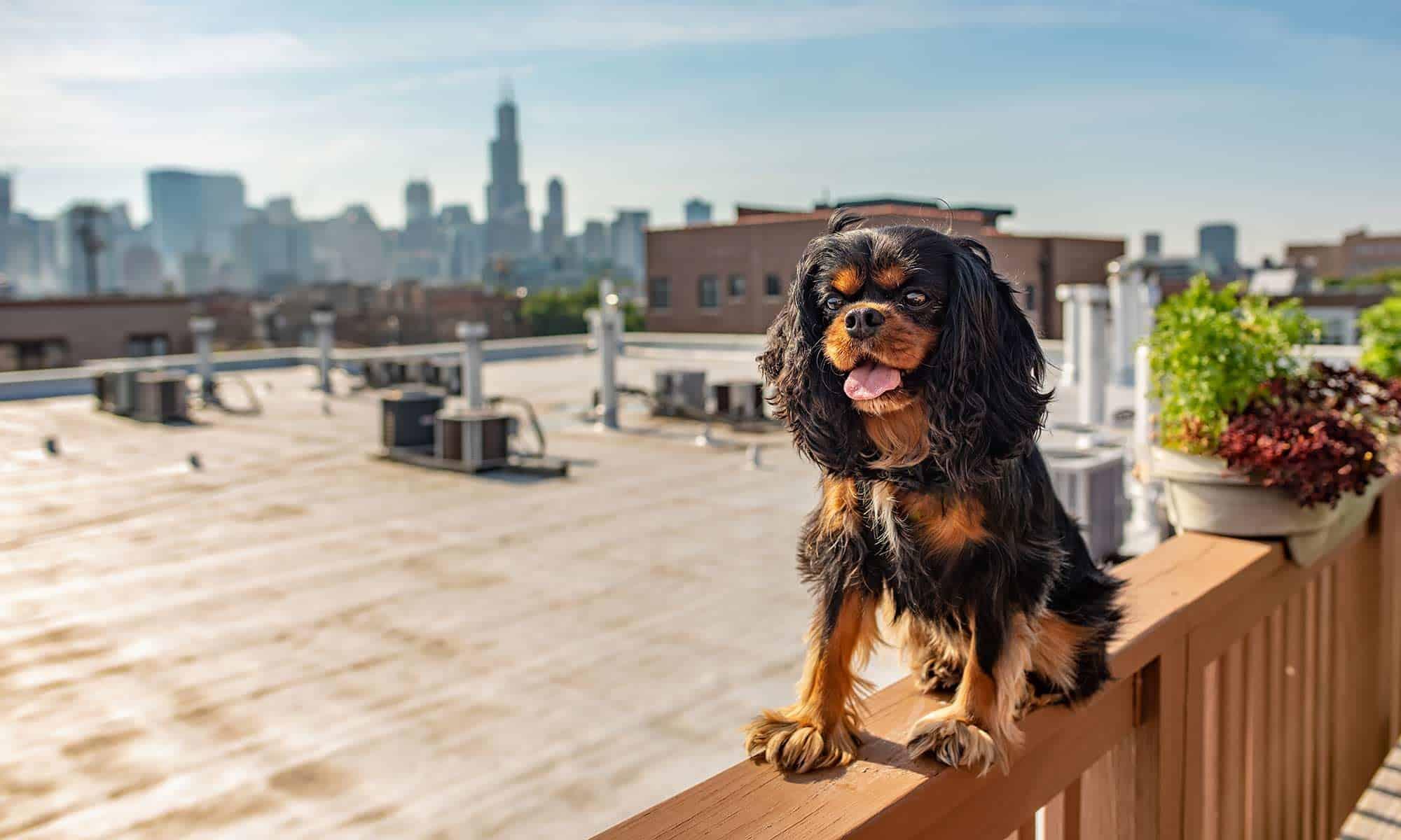 A happy dog sitting on a deck rail
